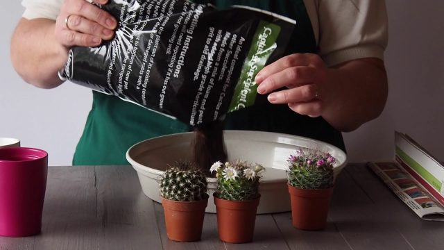 Potting Cacti