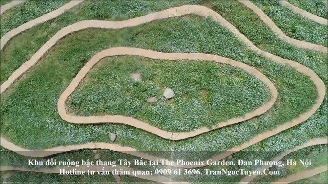 The Phoenix Garden từ PR đến thực tế (cảnh thật thiên nhiên và con người)