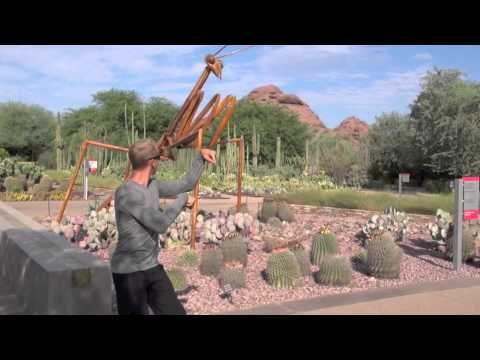 Wooden Praying Mantis Kung Fu at The Desert Botanical Garden