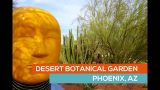 DESERT BOTANICAL GARDEN visit – PHOENIX AZ