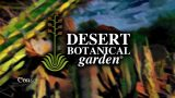 A digital postcard to Desert Botanical Garden