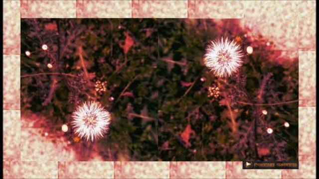 Blossom – Phoenix Garden