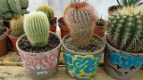Tour of my Cacti Collection / Clip 1