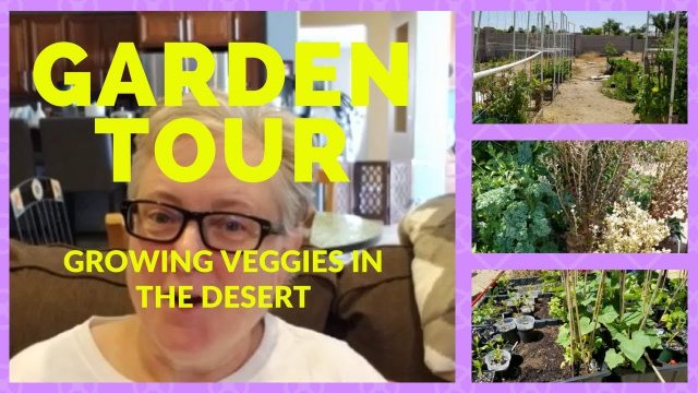 My Vegetable Desert Garden Tour – Growing Vegetables, Herbs and Fruit in the California Desert Heat