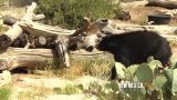 NM True TV – Living Desert Zoo & Gardens State Park