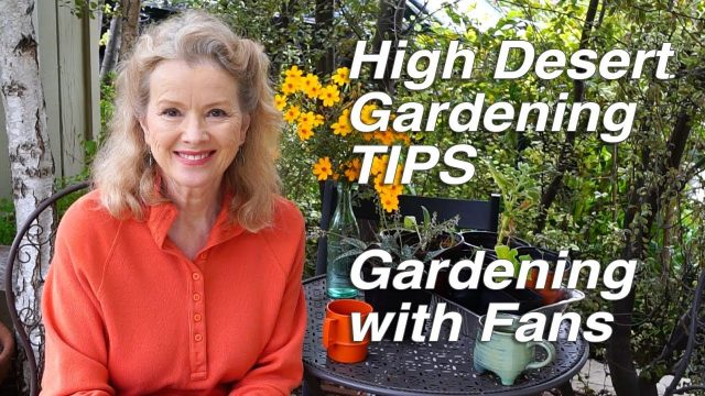 HIGH DESERT GARDENING TIPS | Wood Chips | Urban Gardening with Fans Part 1 | Vlog