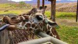 """The Living Desert Zoo & Gardens – Palm Desert, CA – Part 1 (""""Under the Stars"""", Hans Zimmer & Lebo M)"""
