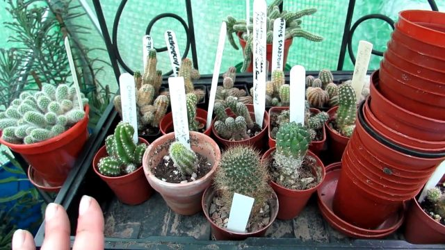 Re arranging Cacti & Succulents in the Polytunnel – VLOG