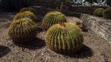 Desert Botanical Garden Phoenix