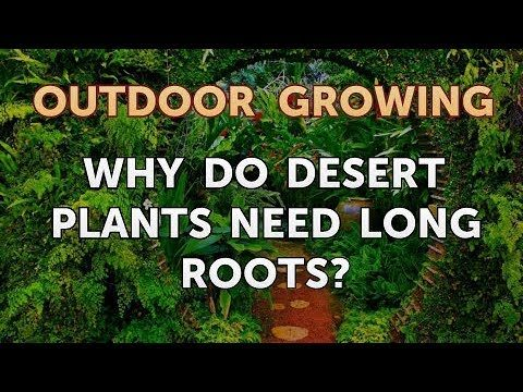 Why Do Desert Plants Need Long Roots?
