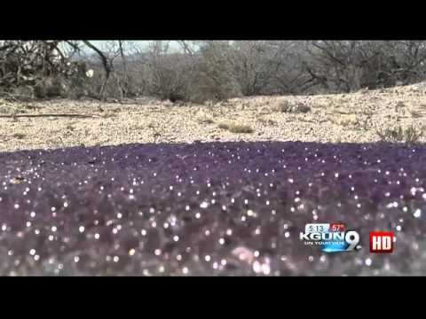 Strange News  Mysterious Purple Spheres Found In Arizona Desert