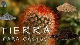 PON ESTA TIERRA A TUS CACTUS Y TE SORPRENDERAS DE LOS RESULTADOS || TIERRA IDEAL PARA CACTUS