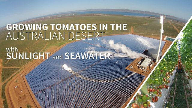 Growing food in the Australian desert with sunlight and seawater – the Sundrop Farms project
