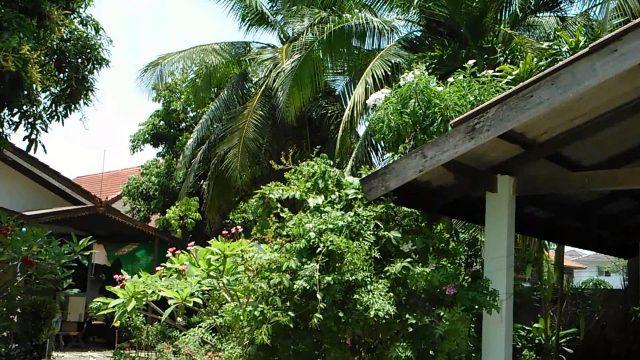 My tropical garden az