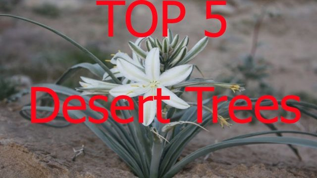 TOP 5 Desert Trees and Plants Grown in the Driest Regions.