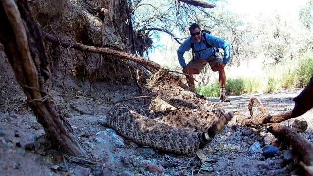Rattlesnake encounter in arizona desert wash.