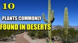 10 Plants Commonly Found In Deserts