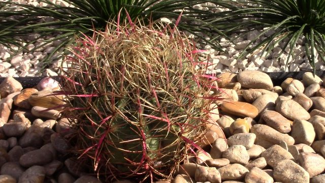 Exotic River Rock Desert Landscaping PART 4