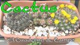 Por qué se mueren los cactus