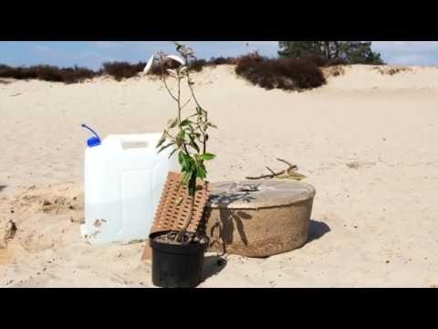 How to grow plants in desert