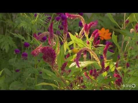 Xeriscape = Grow Green |Dick Peterson |Central Texas Gardener