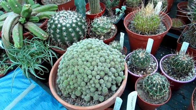 Our Cacti & Succulent Plant Polytunnel Late Summer Update Part One