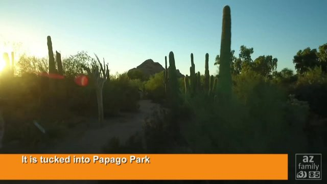 9 things about the Desert Botanical Garden