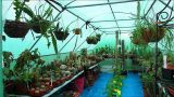 Our Cacti & Succulent Plant Polytunnel Collection end of July Update