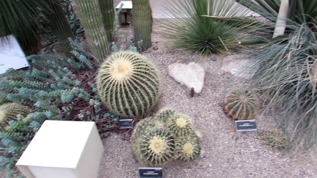 The Cacti & Succulent Plant Collection at The National Botanic Gardens of Ireland Update