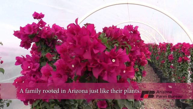 An Arizona Plant Nursery Family: Our Business is Growing