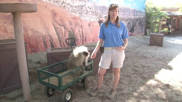 Wildlife Programs at The Living Desert