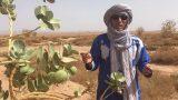 Poisonous plants of the Sahara part 1 – Erg Chigaga Luxury Desert Camp Morocco