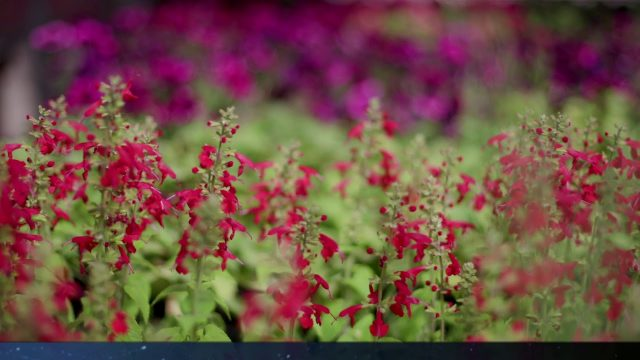 Xeriscaping Ideas – Water Conservation