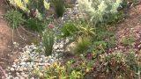 Swale & Rain Garden How To