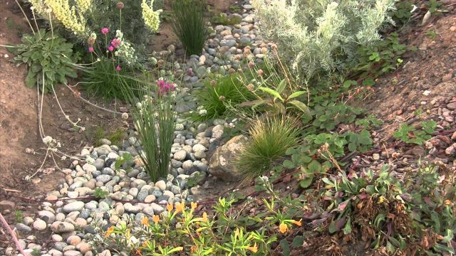Swale & Rain Garden How To