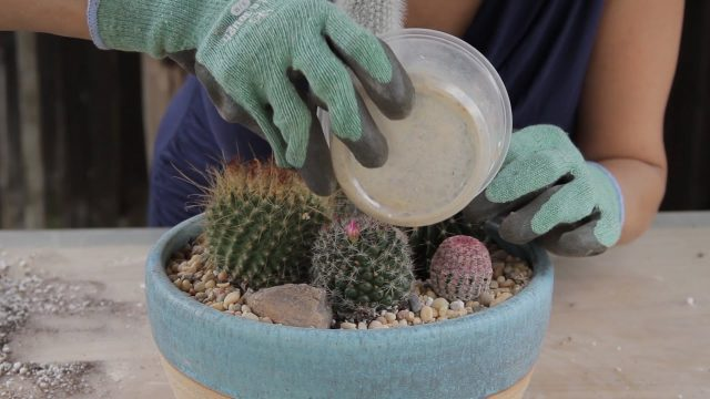How to make a Cactus Garden
