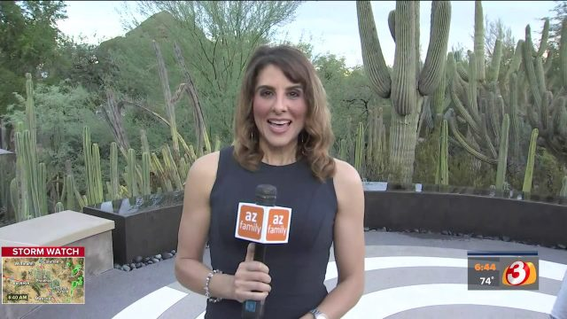 VIDEO: 'Electric Garden' opening up at Desert Botanical Garden next Friday