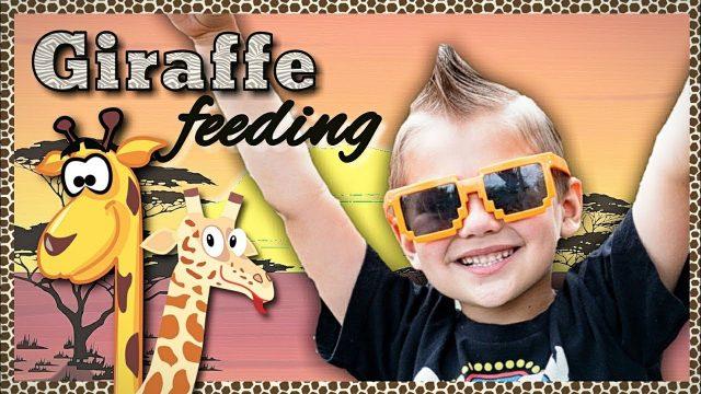 Giraffe Feeding at The Living Desert | Giraffe Facts