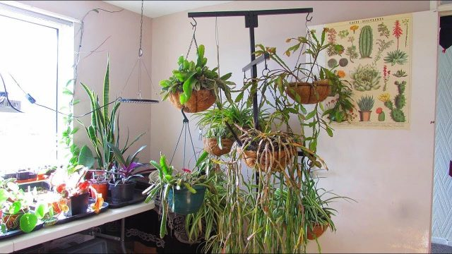 Bringing in our Cacti & Succulents for overwintering Part 2 – VLOG