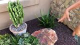 A Beautiful Succulent Garden by Laura Eubanks