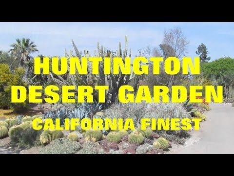 The Plant Traveller:  Huntington Desert Garden