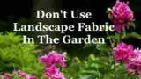 Don't Use Landscape Fabric In The Garden