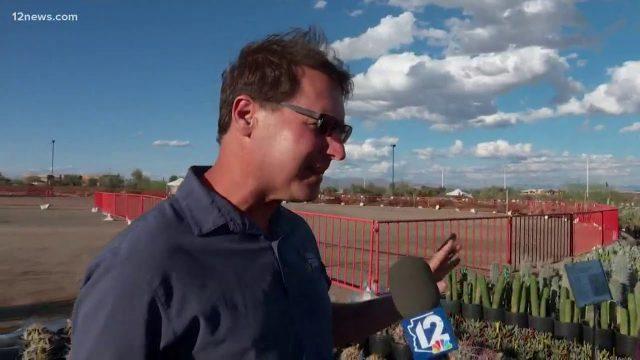 Desert Botanical Garden plant sale set up