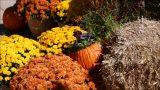 Albuquerque Biopark Botanic Garden
