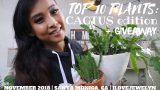 Top 10 plants: Cactus Edition + Giveaway | November 2018 | ILOVEJEWELYN