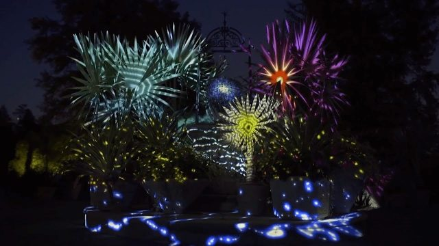 Desert Turns Electric at Desert Botanical Gardens