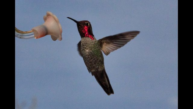 Contrast: Hummingbirds in the Arizona Desert