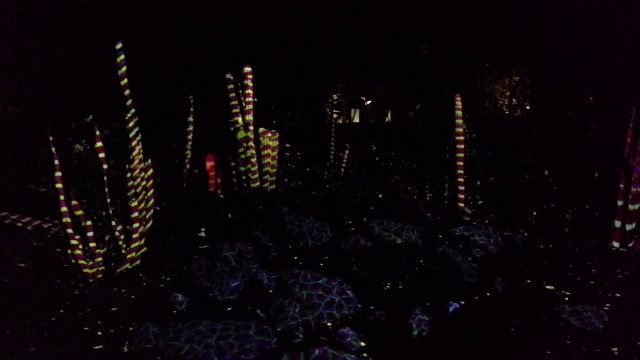 Phoenix Botanical Gardens light show
