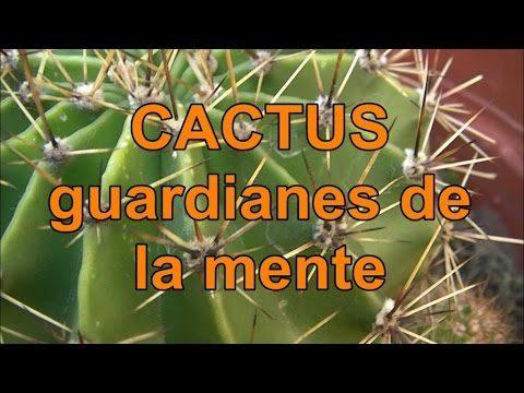 CACTUS protegen TU CEREBRO!!