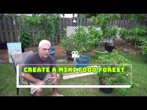 The Edible Food Garden    Food Forest and Edible Landscape